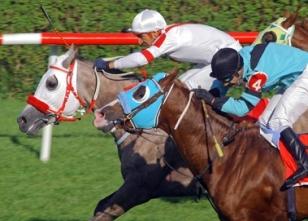 Adana at yarışı sonuçları belli oldu