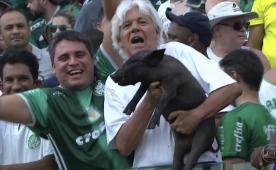 ''Benim gibi'' dedi ve domuz ile maç izledi