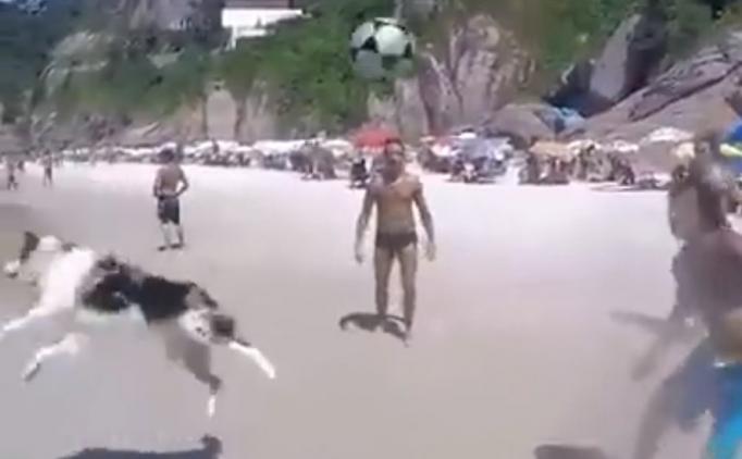 Bu köpek futbolculara taş çıkarıyor
